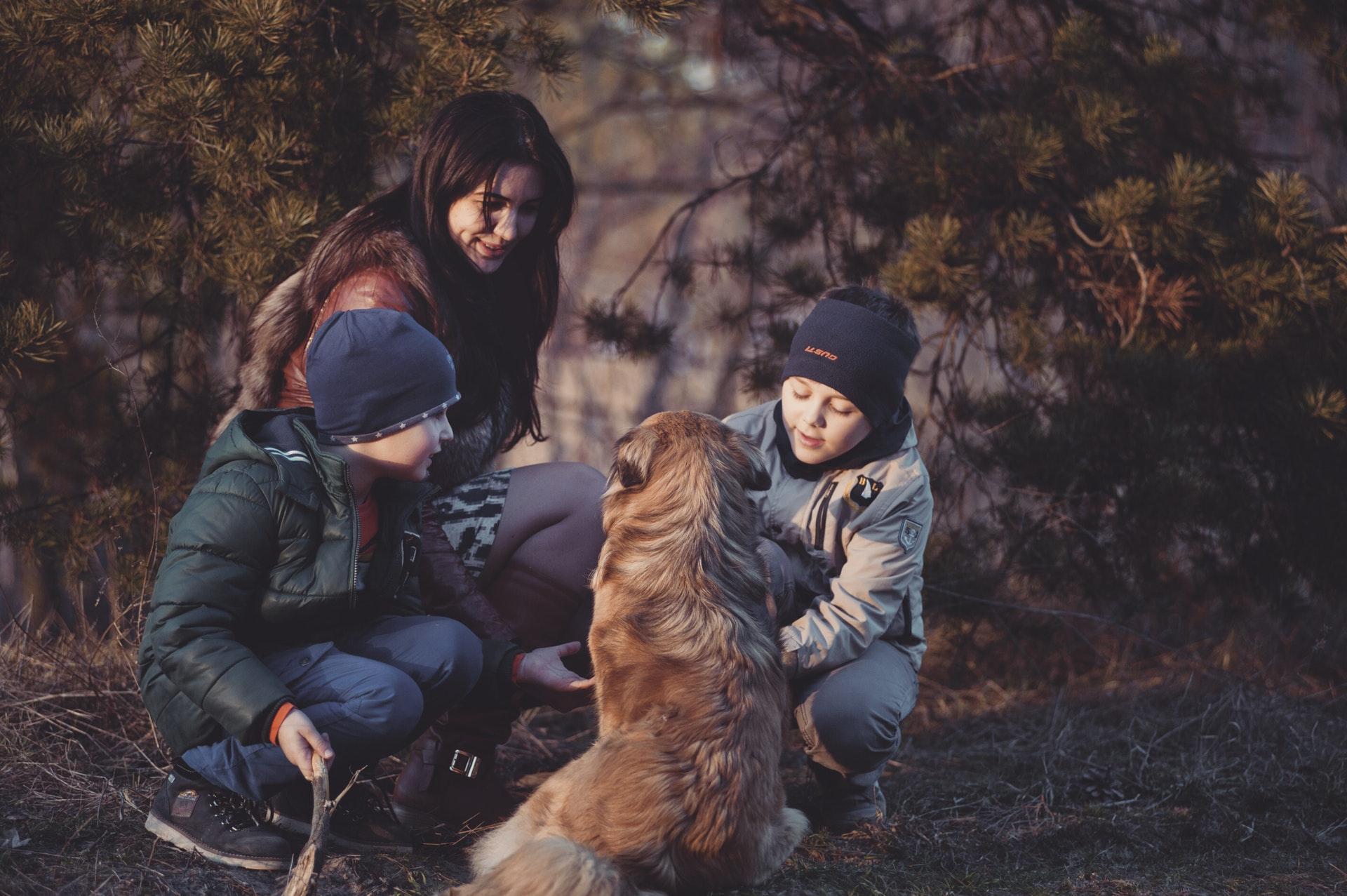 Hunden och hälsan Image